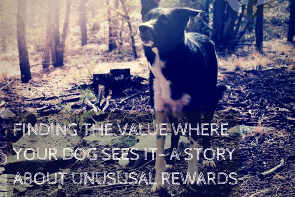 Finding The Value Where Your Dog Sees It - SpiritDog Training