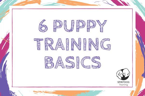 6 Puppy Training Basics