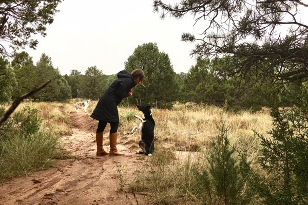 6 Signs Of A Good Dog Trainer