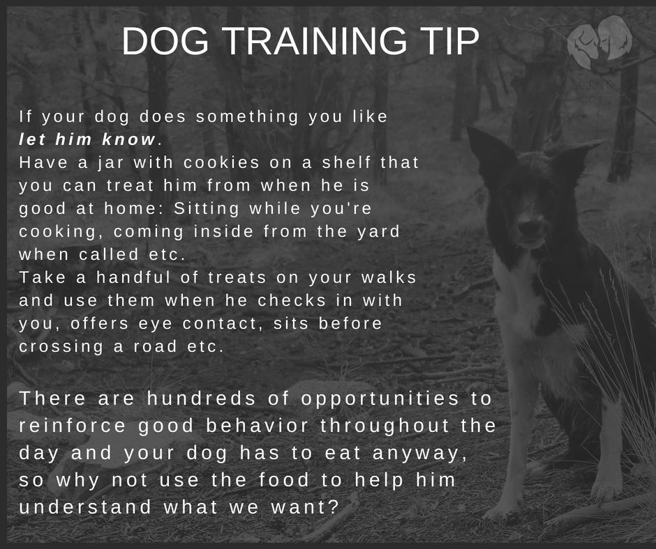dog training tip 3