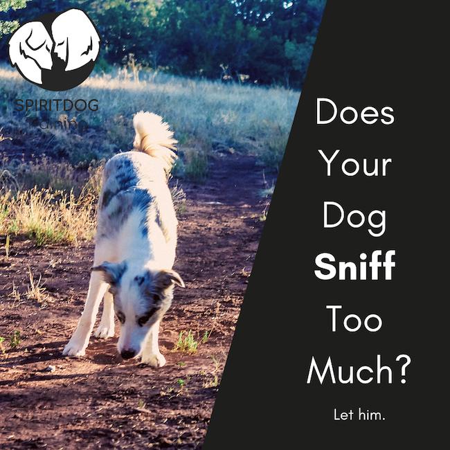 dog sniffs