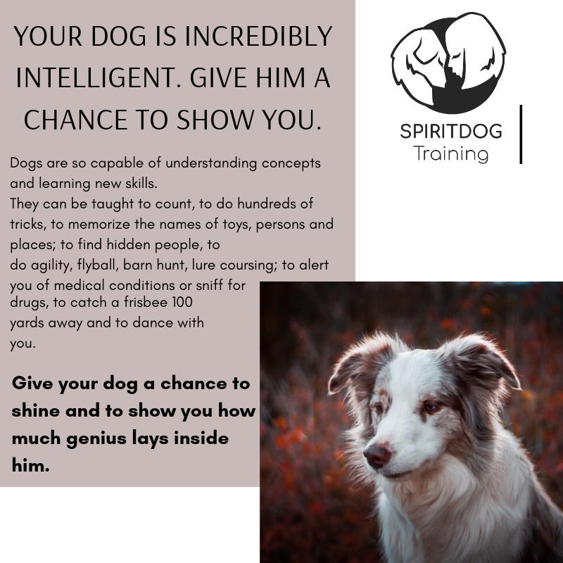 dog intelligence