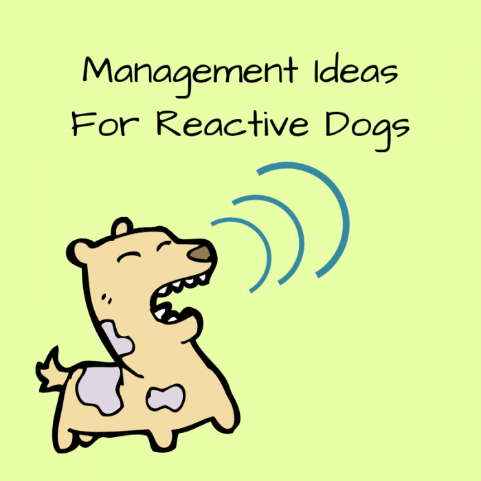 reactive dog ideas